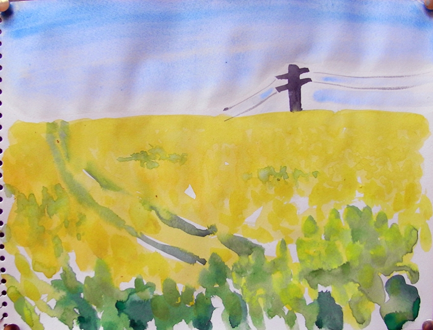 the rapeflowers are yellow, the field is on a slope, tractor tracks have dug grooves through the crop, on the high horizon is a telegraph pole with wires stretching beyond