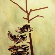 Untitled (dead tree and fungus), 1982