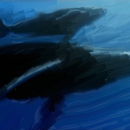 Whale and calf, 2006