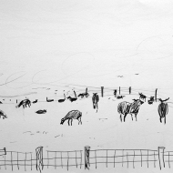 Zwartbles in the Mist, drawing by Jo Dunn, 2016
