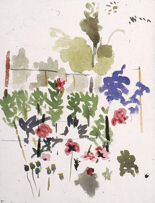 wild flowers in the back garden