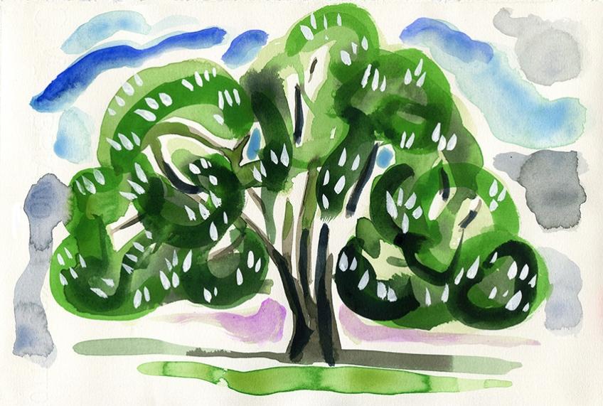 Horse chestnut tree, Potternewton Park, Leeds 7