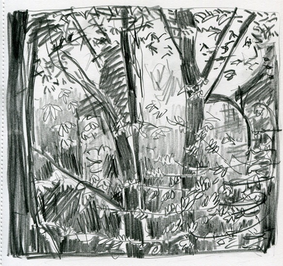 pencil drawing of the woods