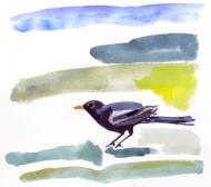 Blackbird, watercolour painting by Jo Dunn 2011